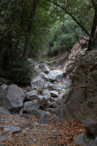 The trail leading up Millard Canyon to Dawn Mine.